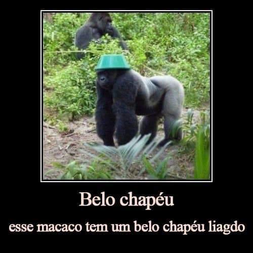 Macaco de chapéu - meme