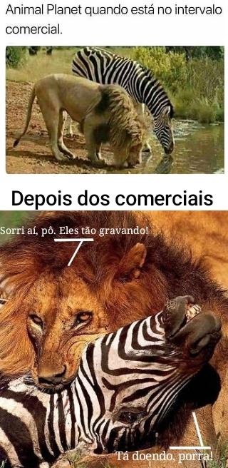 mundo animal - meme