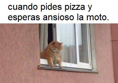 La pizza es lo mejor. - meme