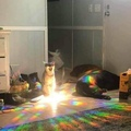 cats with inter-dimensional portals