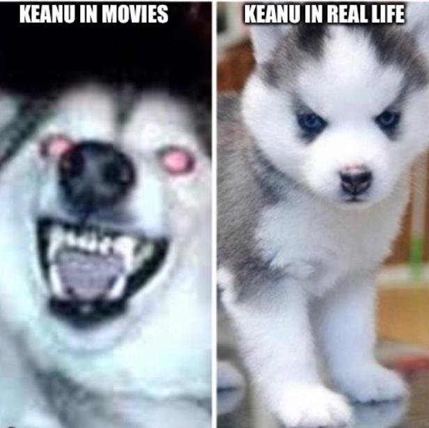 Keanu Reeves - meme