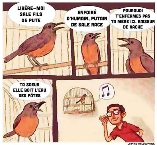 Que dise les oiseaux ? - meme