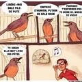 Que dise les oiseaux ?