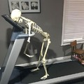 Dying skeleton
