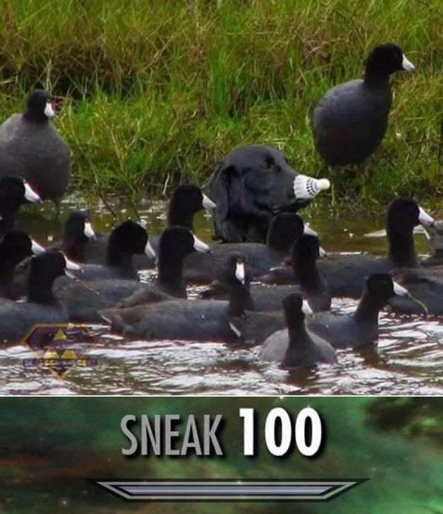Quack - meme