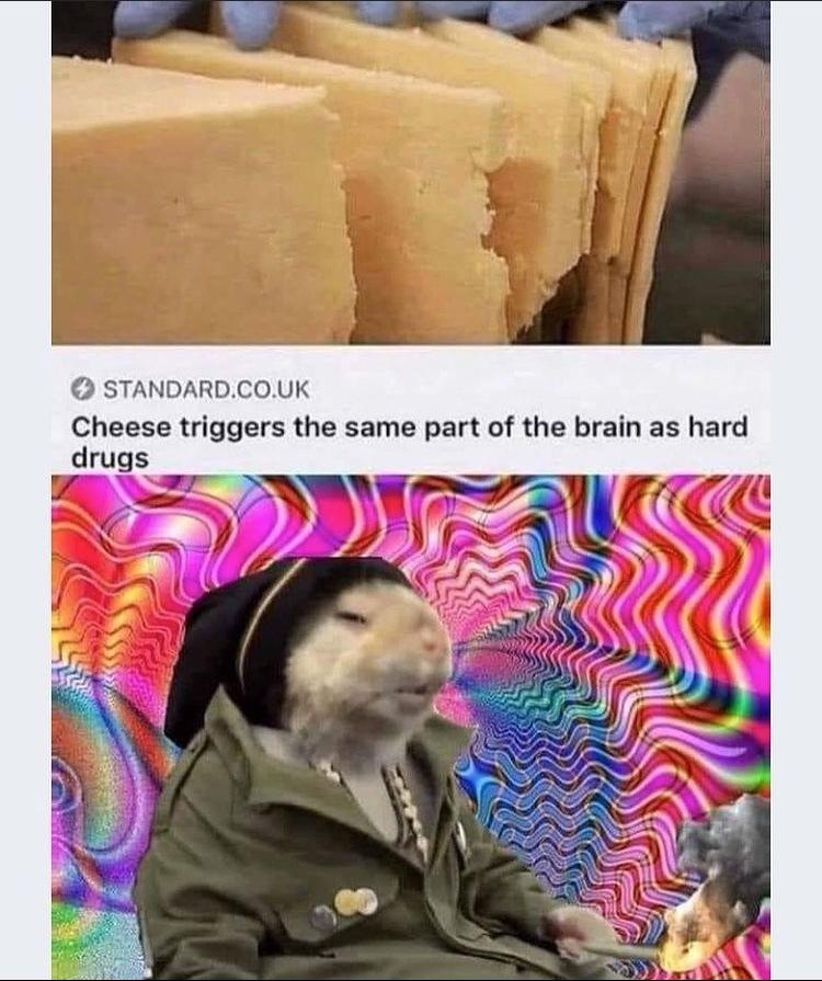 rat drug trip - meme