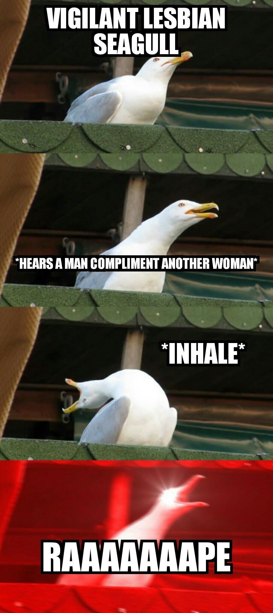 FlywithMelesbianseagull - meme