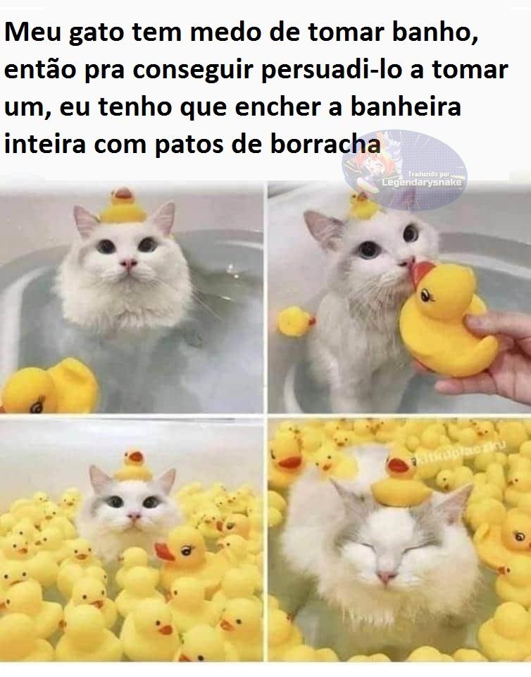 Wet Pussy - meme