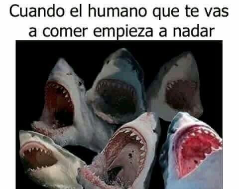 [*insert shark laught] - meme