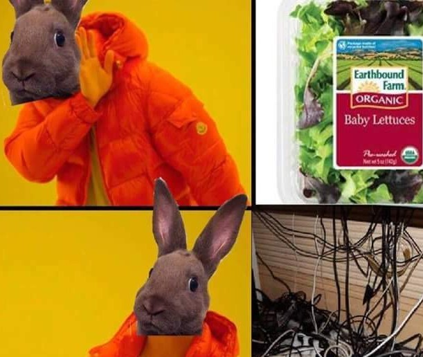 Bunny owners know this struggle - meme