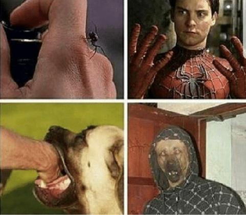 Dog man - meme