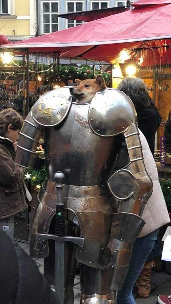 Contemplem o dog guerreiro - meme