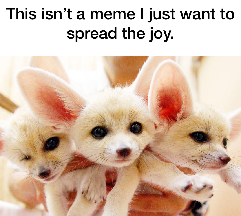 Sorry just so cute - meme