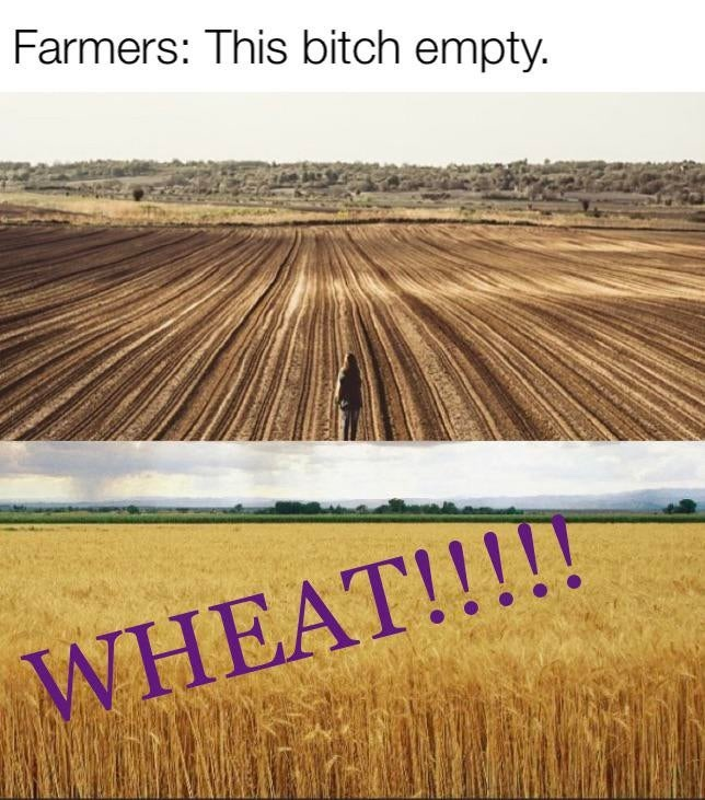 HA WHEAT - meme