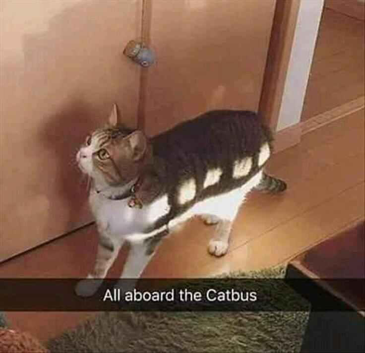The cat has windows - meme