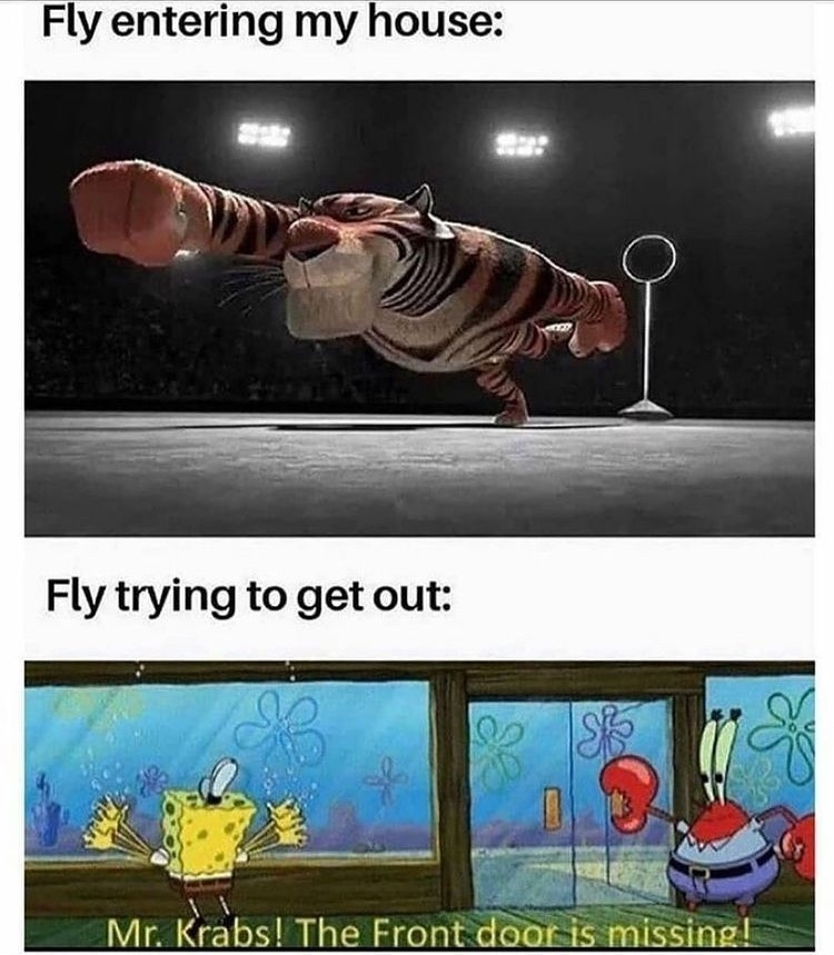 come fly with me - meme