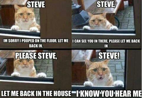 Steve? - meme