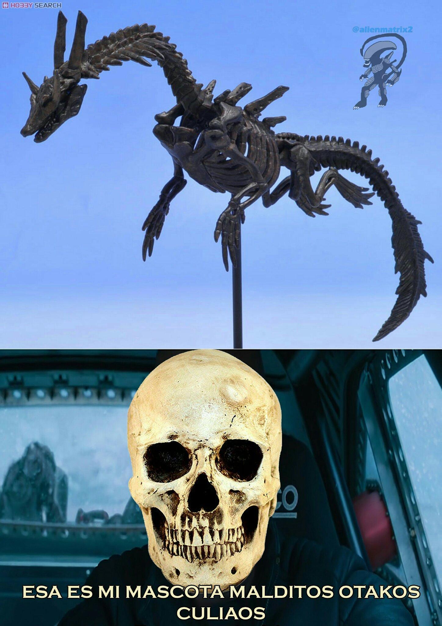 Los otakos están perdidos ante nuestro esqueleto anti otakos favorito - meme