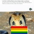 La cobra gay
