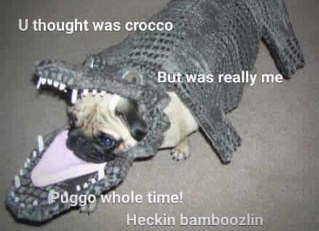 This heckin bamboozlein boi - meme