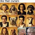 Dogs really do look like their owners