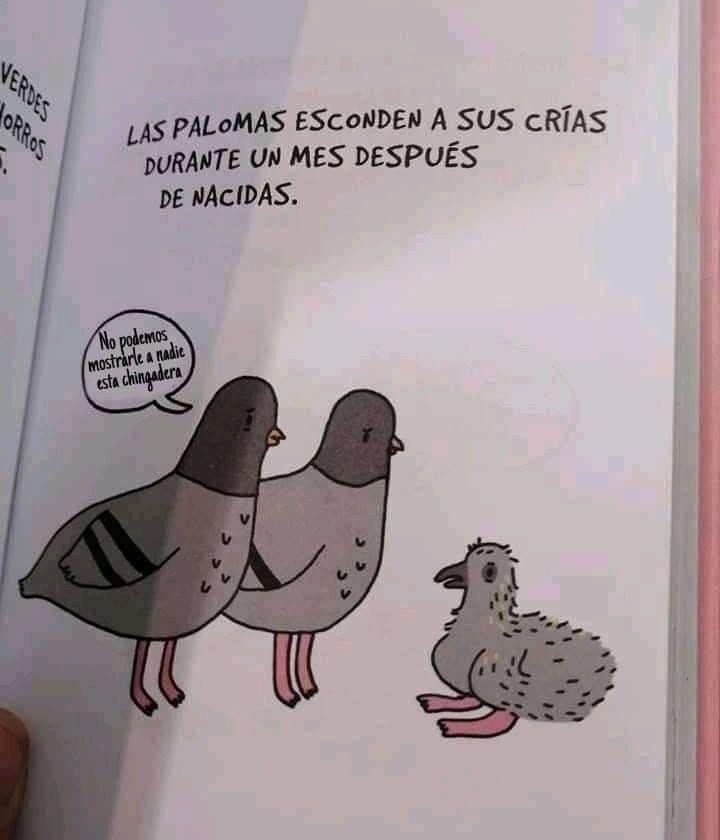 Viva Perú, señorita Laura - meme