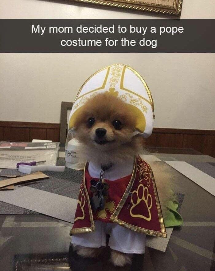 That's One Holy Pupper! - meme