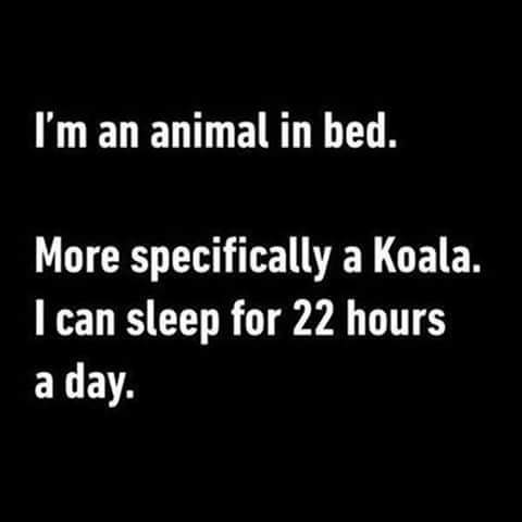 Animal in bed - meme