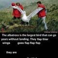 flap flap flap