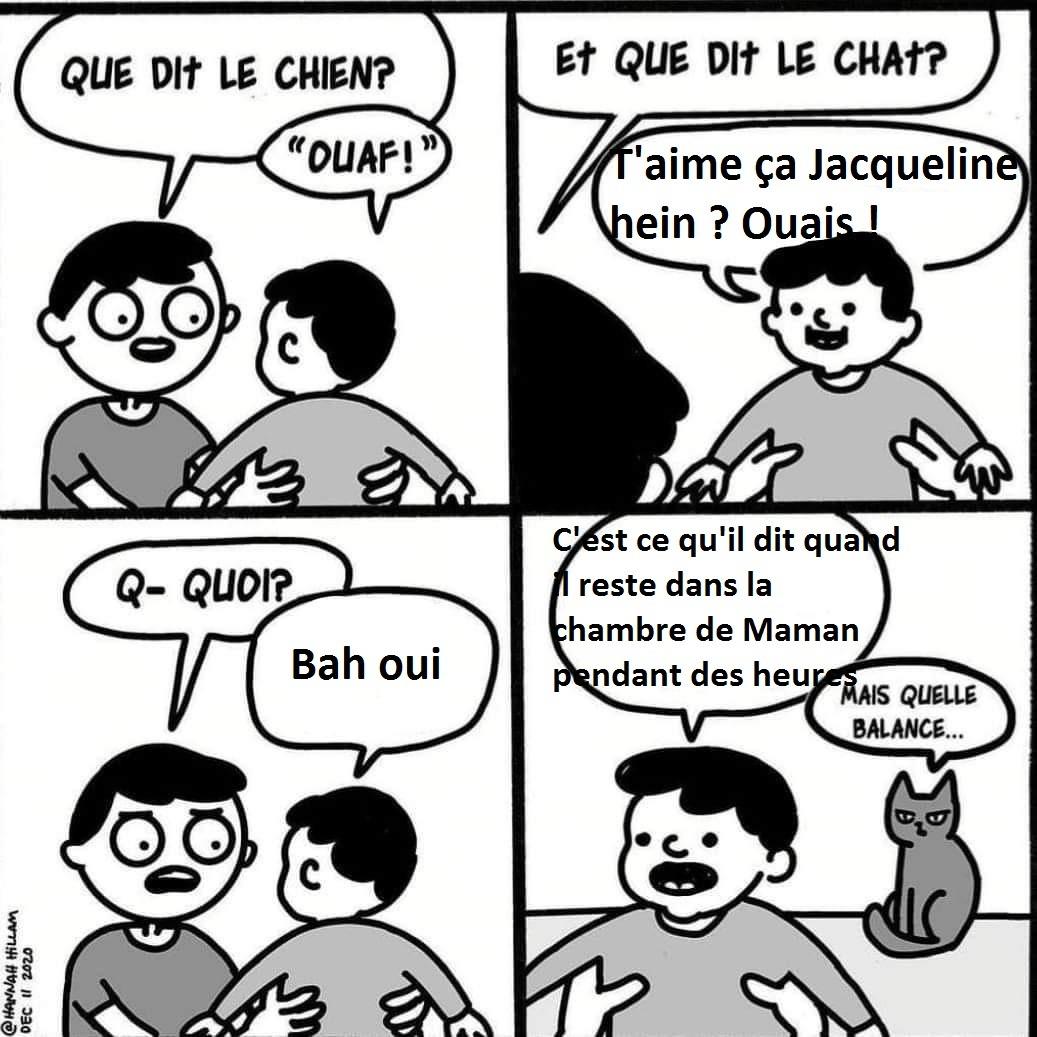 le coquin - meme