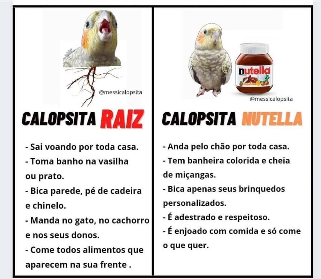 Calosptia - meme