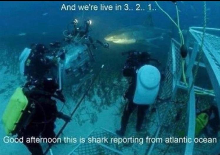 shark reporter - meme