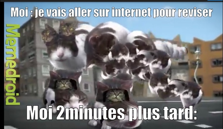 welcome to kitty city - meme