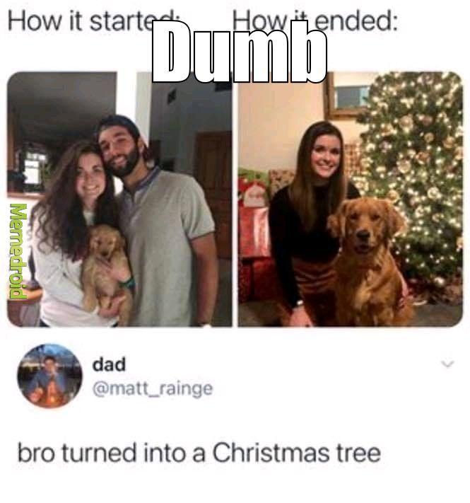 Dumb but true - meme