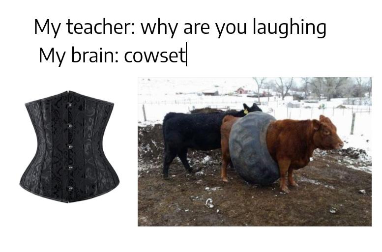 corset fer cows - meme
