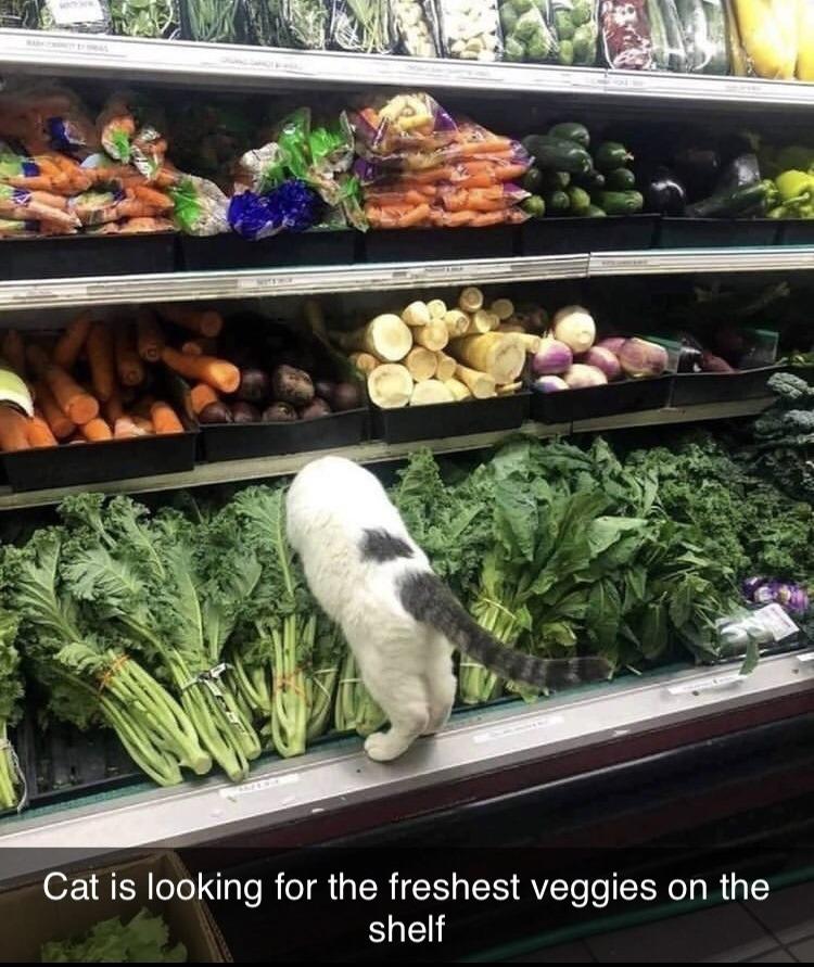 shopping for groceries - meme