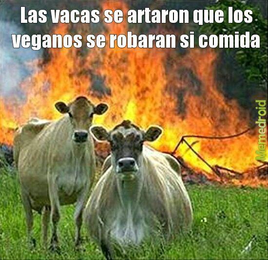 Vacas - meme