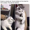 catto hug lil baby catto