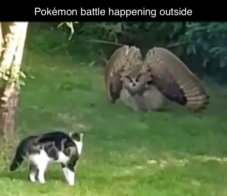 owl gets big - meme