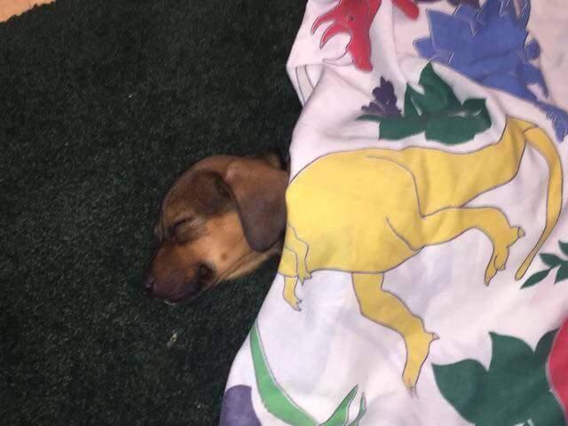Dream on pupper! - meme