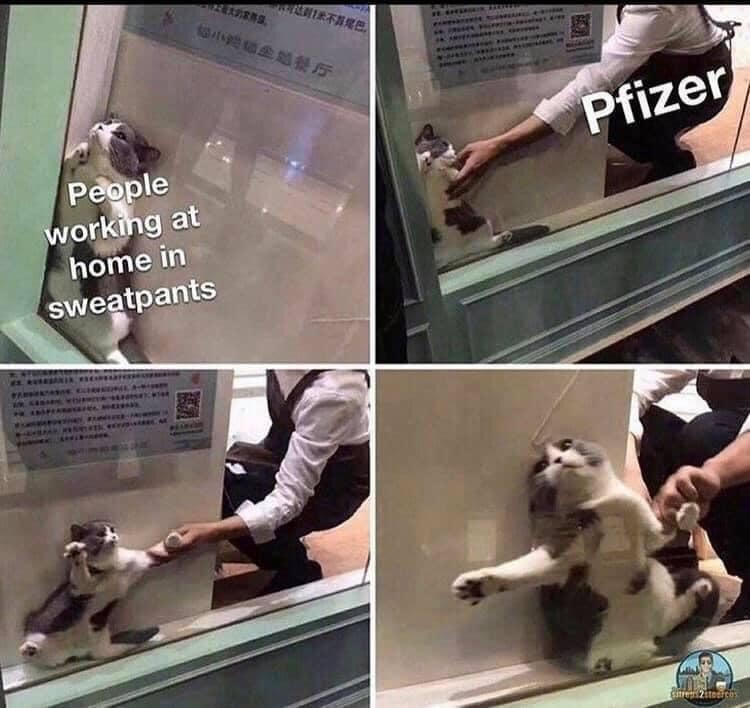 Cat & pfizer - meme