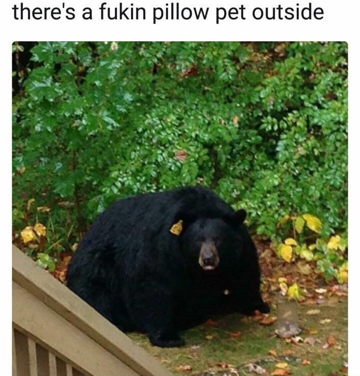 Pillow Pet - meme