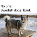 This is a Swedish dog