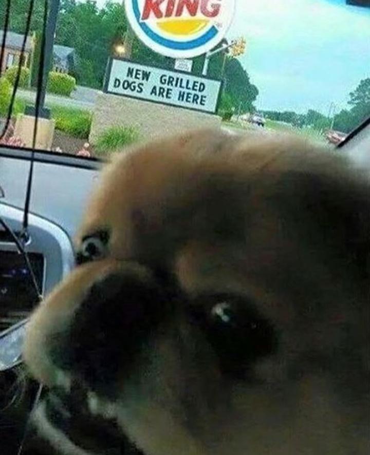 Sad pupper - meme