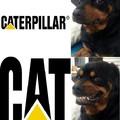 El perro anti-gatos