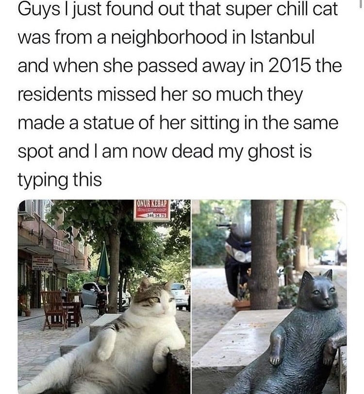 pussy statue killed me - meme