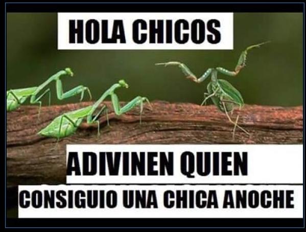 Mantis :V - meme
