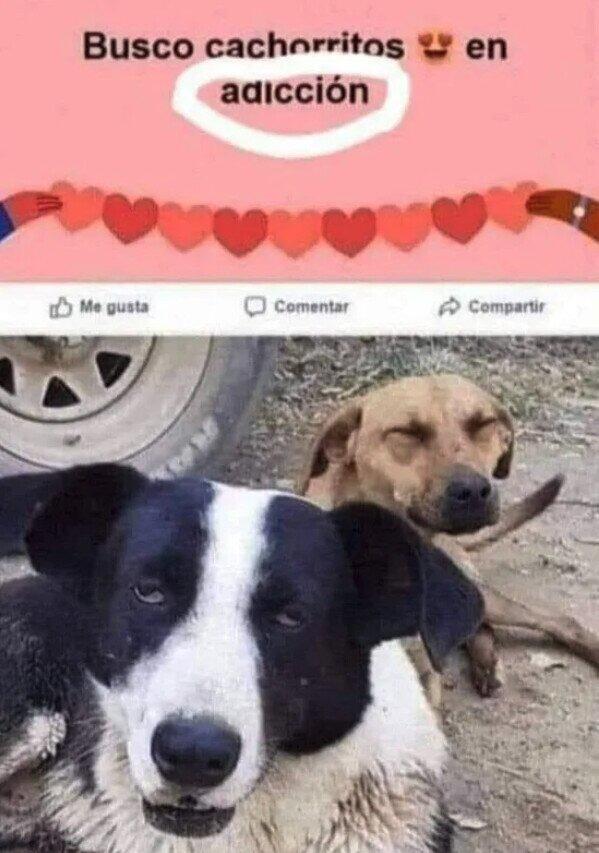 Ese perro se tomo de la buena - meme