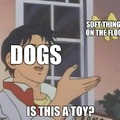 *my dogs fight in the background as I make this meme and ridicule their doggishness*
