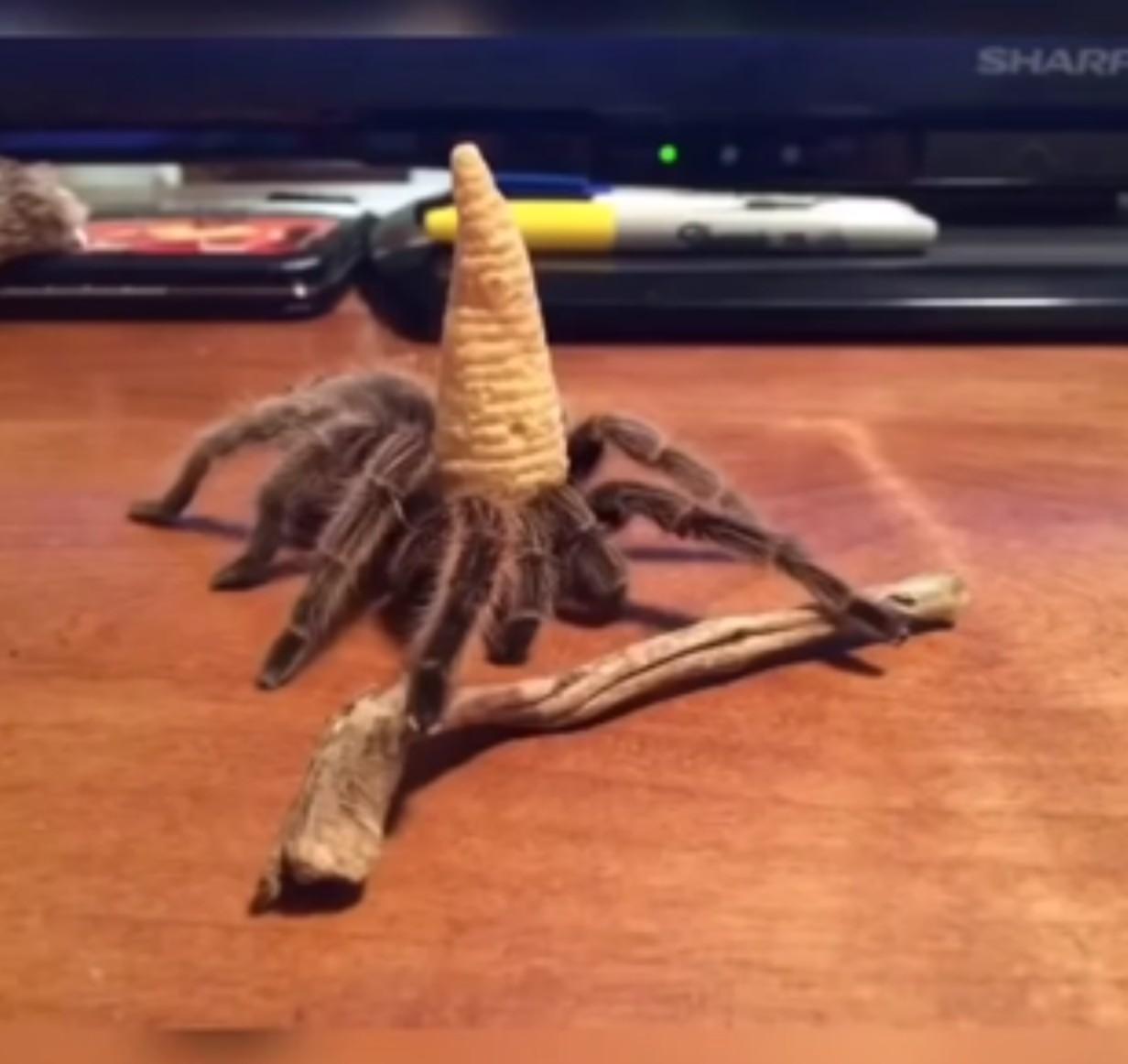 Gandalf des araignée - meme